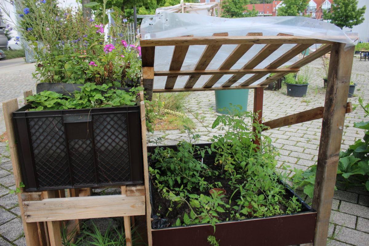 Klimafreundlich gärtnern – so geht's